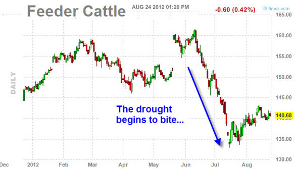 feeder cattle